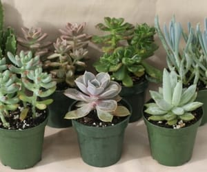 plants, succulent, and cactus image
