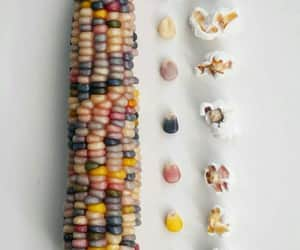 colors, corn, and food image