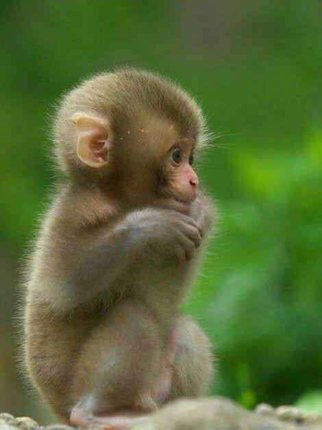 monkey, animal, and sweet image