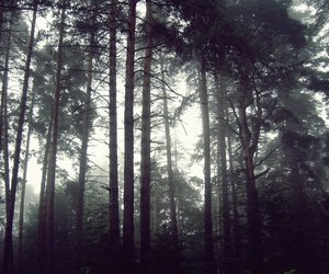 cold, forest, and dark image