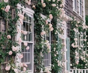 flowers, rose, and home image