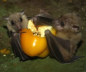 bats, cute, and animal image