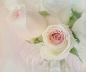 light pink rose, soft flowers, and soft rose flowers image