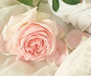 pink roses and light pink rose image