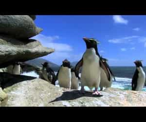 penguin, youtube, and video image