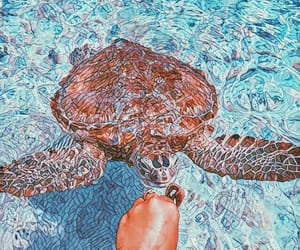 edit, mosaic, and sea turtle image