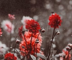aesthetic, flowers, and red image