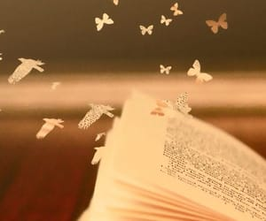 book, butterfly, and bird image