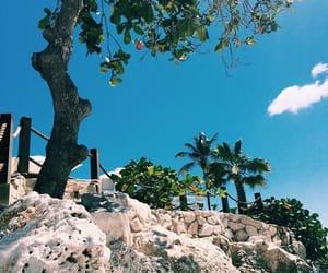 2016, beach, and palmtrees image