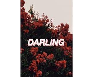 beautifull, bloom, and darling image