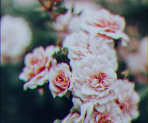 background, fiori, and flowers image