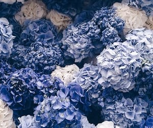 background, blue flower, and flower image