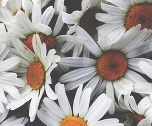 flowers, header, and daisy image