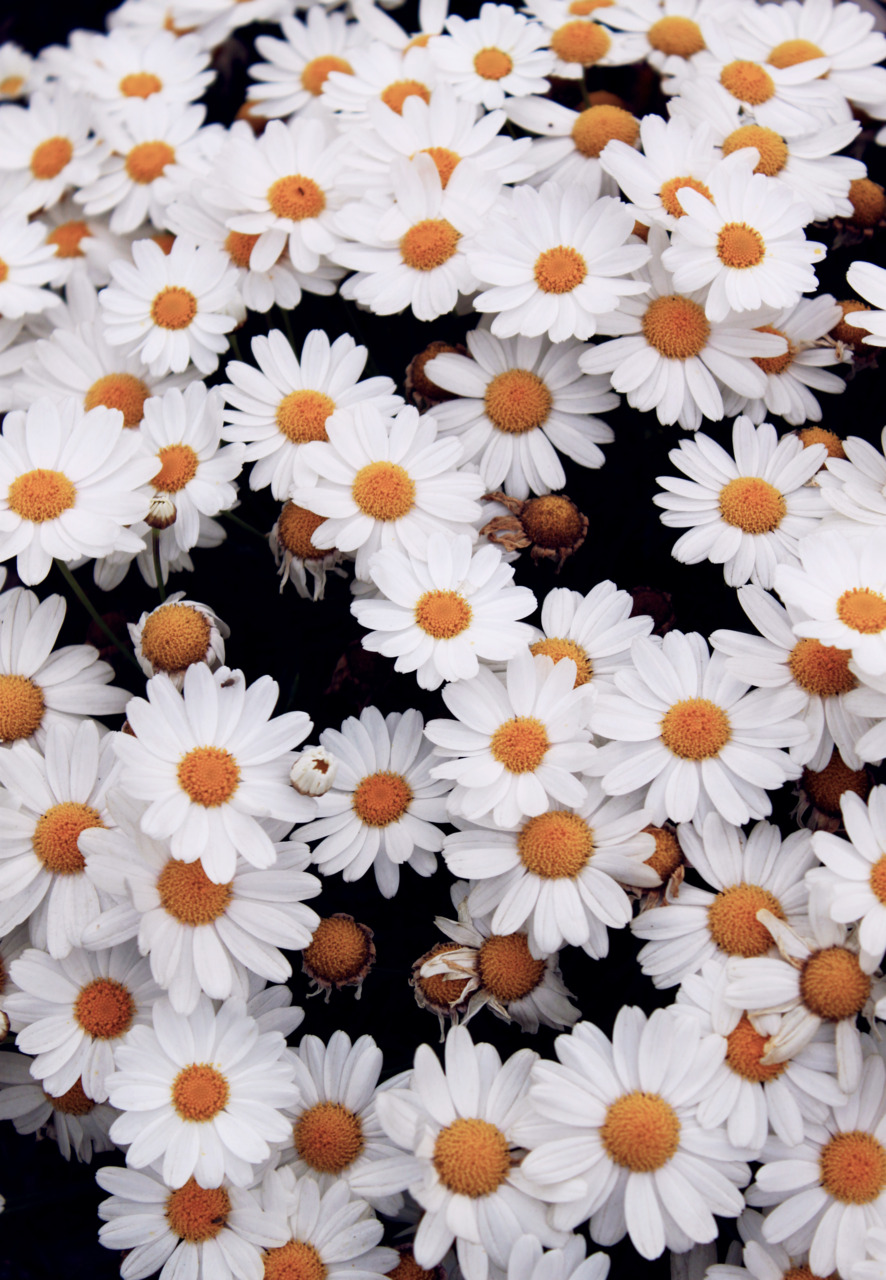 27 images about daisies🌼 on we heart it | see more about daisy