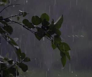 gif, rain, and nature image