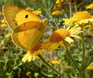 butterfly, flowers, and yellow image