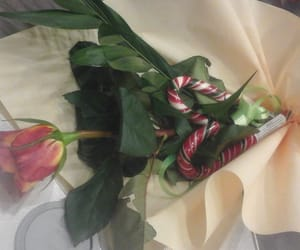 rosu, inima, and trandafir image