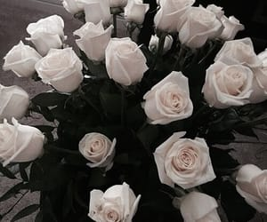 theme, flowers, and rose image