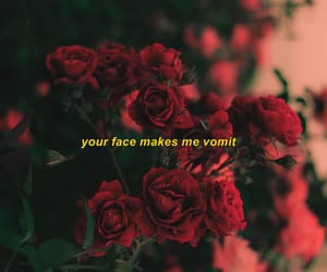 face, quote, and roses image