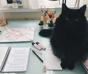 cat, studying, and motivation image
