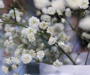 background, white, and flowers image