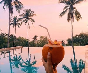 summer, coconut, and palm trees image