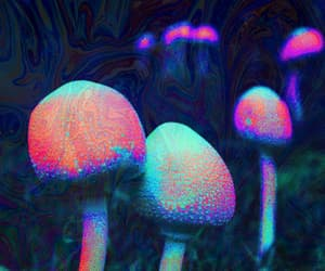 mushroom, drugs, and shrooms image