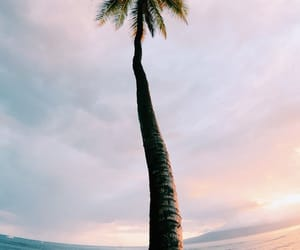 palm trees, summer, and beach image