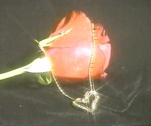 rose, gif, and aesthetic image