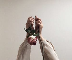rose, aesthetic, and hands image