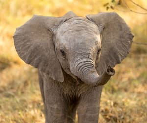 elephant, animals, and baby image