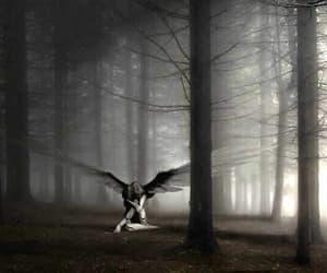 angel, fantasy, and enchanted image