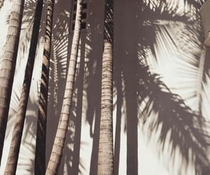 aesthetic, palms, and summer image