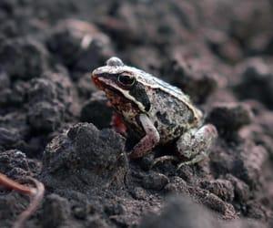 animal, closeup, and frog image