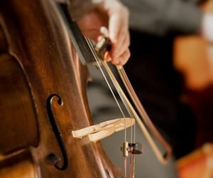 cello, music, and instrument image