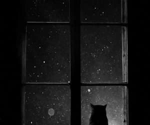 cat, gato, and gif image