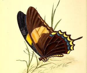 insects, butterflies, and scientific illustration image