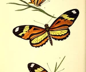 insects, lepidoptera, and 19th century book image