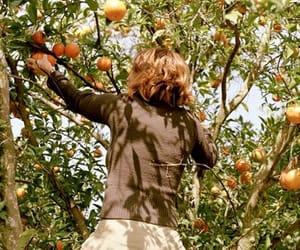 fruit, orange, and tree image