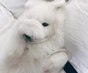 dogs, fur, and cute image