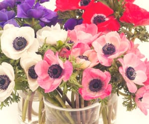 anemone flowers, buy anemone flowers, and bulk flowers for wedding image