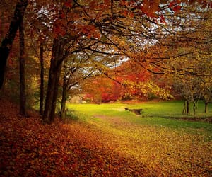 autumn, brown, and park image
