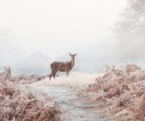 animals, calm, and mist image