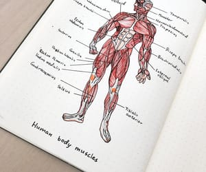 anatomy, biology, and calligraphy image