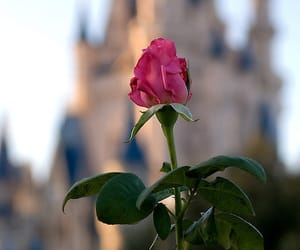 disney, rose, and castle image
