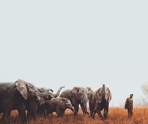 animal, big, and cute animals image
