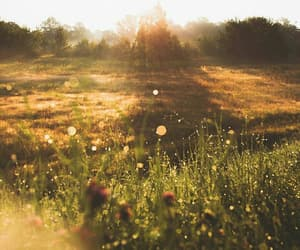 light, meadow, and photography image