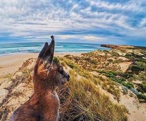australia, Oz, and australie image