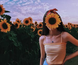 flowers, sunflower, and blue image