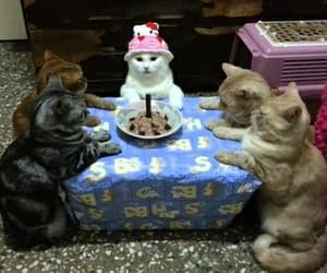 cat and birthday image